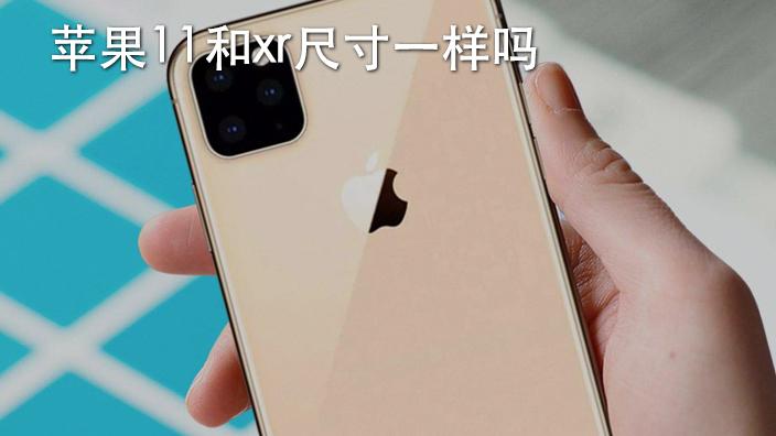 苹果11和xr尺寸一样吗