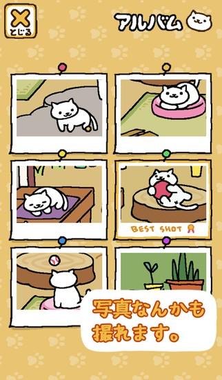 猫咪后院iPhone版